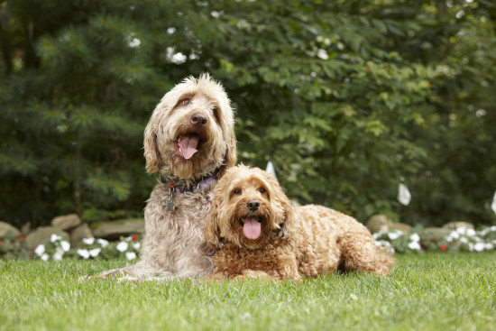 DogWatch Dealer Photo